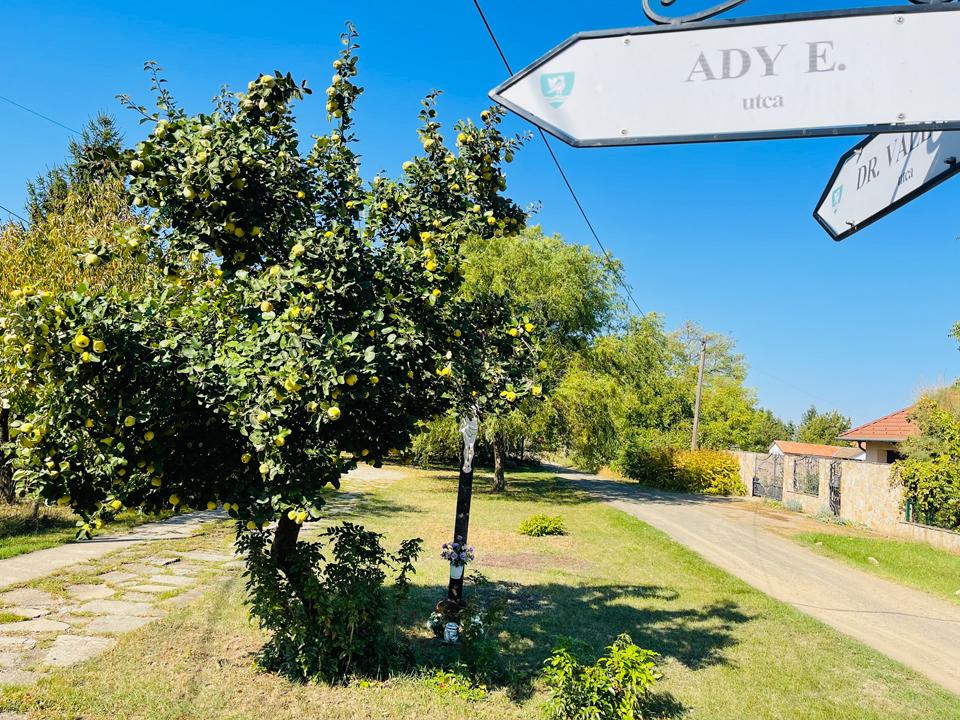 gyümölcsfa és utcatábla